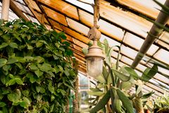 Serre in botanische tuin Oude Lamp royalty-vrije stock afbeelding