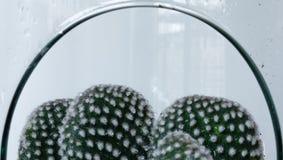 serre Cactus Glas Tuin nave watering deco stock foto's