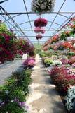 Serre chaude avec des fleurs Image libre de droits