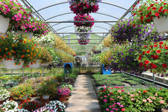 Serre chaude avec des fleurs Images stock