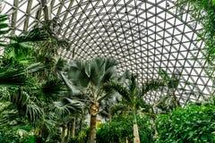Serre chaude 4 de jardin botanique de la Chine Changhaï photo stock