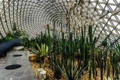 Serre chaude 18 de jardin botanique de la Chine Changhaï photo libre de droits