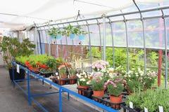 Serre chaude de jardinerie d'usines de fleurs, Japon Photos libres de droits