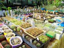Serre chaude des succulents Images stock