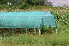 Serre chaude en plastique complètement couverte de filet vert de protection pendant l'été utilisé pour cultiver des tomates entou photos libres de droits
