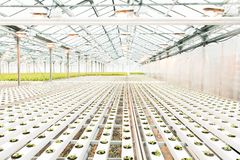 serre chaude légère et la production des fruits et légumes photo stock