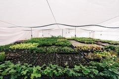 Serre chaude ou serre hydroponique moderne, culture et élevage des plantes ornementales et des fleurs pour le jardinage Photos libres de droits