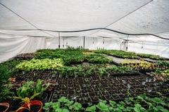 Serre chaude ou serre hydroponique moderne, culture et élevage des plantes ornementales et des fleurs pour le jardinage Image stock