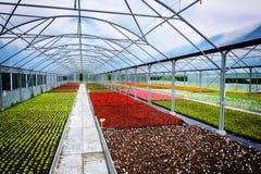 Serre chaude pour l'horticulture Images libres de droits