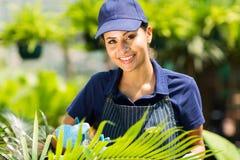 Serre chaude travaillante de jardinier Photographie stock libre de droits