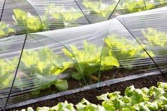 Serre chaude végétale photographie stock libre de droits