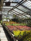 Serre in de botanische tuin Stock Fotografie