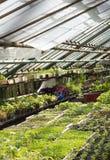 Serre in de botanische tuin binnen Stock Foto's