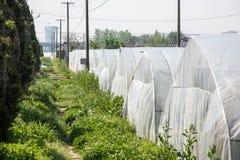 Serre di verdure fotografia stock libera da diritti