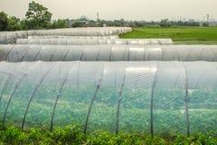 Serre di verdure del film di materia plastica Fotografie Stock
