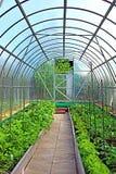 Serre di verdure fatte del policarbonato trasparente Fotografie Stock