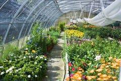 Serre met bloemen stock foto's