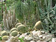 Serre met cactussen Stock Afbeeldingen