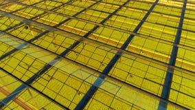 Serre met het glas binnen dak, veel groene installaties, luchtschot stock video
