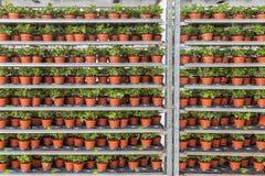 Serre met opslag van de installaties van het bloembed in het rekken van systeem royalty-vrije stock foto