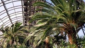 Serre met palmen De stralen van de zon verlichten palmtakken die op glasdak rusten van wintergarden Uitheemse gewassen stock footage