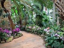 Serre met tropische installaties met bloemen stock fotografie