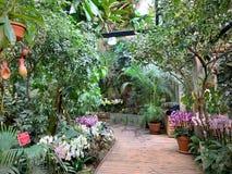 Serre met tropische installaties met bloemen stock afbeeldingen