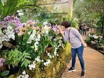 Serre met tropische installaties met bloemen royalty-vrije stock fotografie