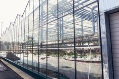 Serre moderne industriali o giardinaggio esteriore di agricoltura della serra o della serra Immagine Stock Libera da Diritti