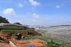 Serre nella valle dell'abetaia in Dalat, Vietnam Immagini Stock Libere da Diritti
