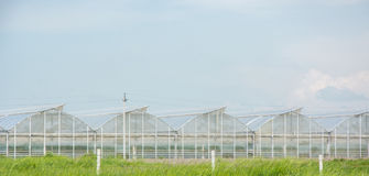 Serre per le verdure crescenti Fotografie Stock Libere da Diritti