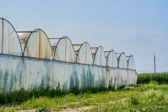 Serre per le verdure crescenti Fotografia Stock Libera da Diritti
