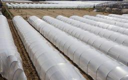 Serres chaudes de PVC Image stock