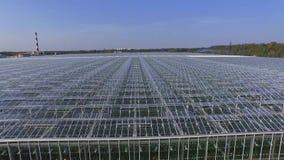 Serres voor groenten in de loop van de dag, luchtmening, vlieg bewegende camera stock footage