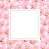 Serrulata del Prunus - fiore di ciliegia, Sakura Banner Card Illustrazione di vettore royalty illustrazione gratis