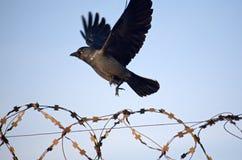Servage et liberté Images stock