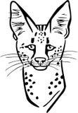 Serval Cat Face Fotografia Stock