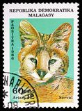 Serval (Leptailurus serval), Wildcats serie, circa 1986. MOSCOW, RUSSIA - NOVEMBER 10, 2018: A stamp printed in Madagascar shows Serval (Leptailurus serval) royalty free stock photo