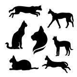 Serval set vector. Serval set of silhouettes vector vector illustration