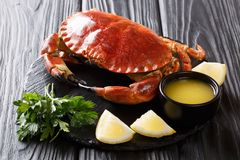 Served煮沸了纤巧棕色螃蟹用调味汁、柠檬和荷兰芹 库存图片