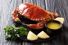 Served kokade läckerhet den bruna krabban med sås, citronen och persilja fotografering för bildbyråer