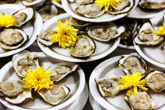 Served portion of fresh oysters on plastic plates Royalty Free Stock Photos