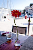Served table in restaurant with daisy Royalty Free Stock Photo
