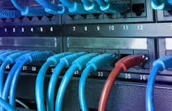 Server rack with blue internet patch cord cables Royalty Free Stock Photography