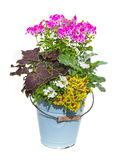 Serveral garden flowers in a enamel bucket. Royalty Free Stock Photo