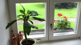 Servett för växtomsorghand arkivfilmer