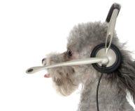 Serviço de atenção a o cliente canino foto de stock