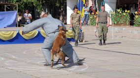 Service angry dogs bites man into special clothes on training with soldier in military uniform in courtyard. Kherson, Ukraine, 5 August 2017: military training stock video