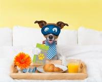 Service de chambre d'hôtel avec le chien photo libre de droits