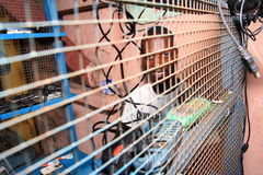 Service des téléphones portables sur la rue africaine Photographie stock